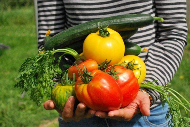 Vegetables 742095 1280 Pixabay