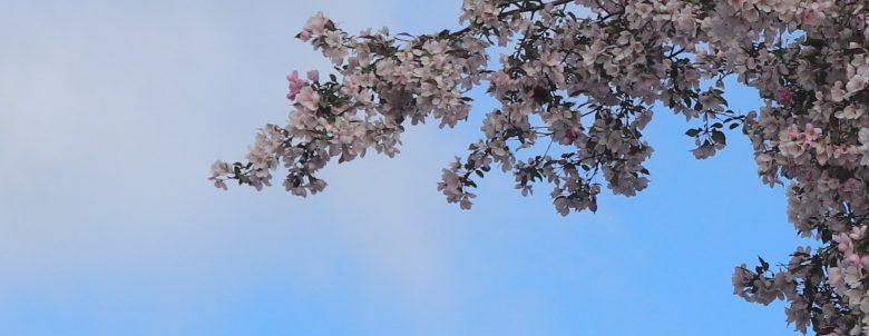 Fleurs 8123