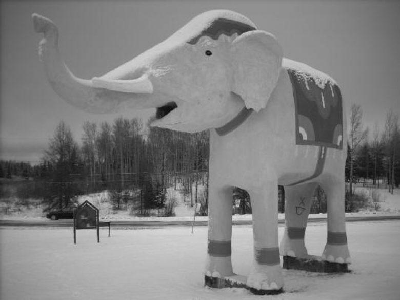 Elephant Conte