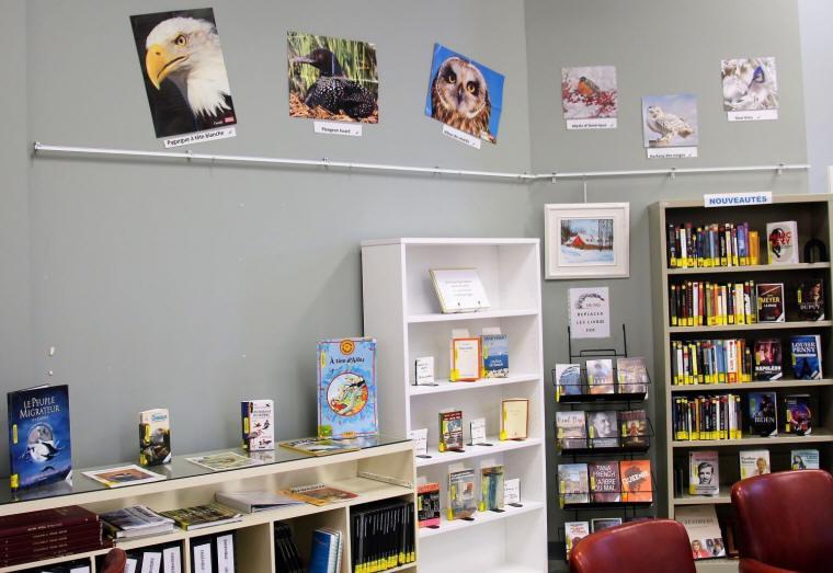 À la bibliothèque, photos de pygargue à tête blanche, plongeon huard, hibou des marais et autres...