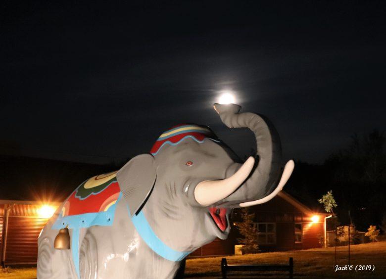 Éléphant'eau sous la lune