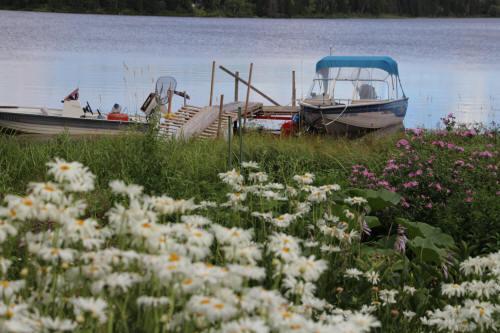 Champ de marguerites et bateaux près du quai