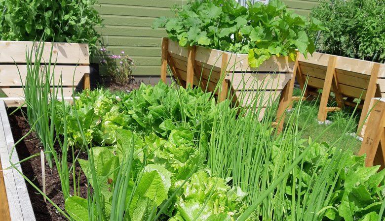 HLM d'Évain - bacs de légumes