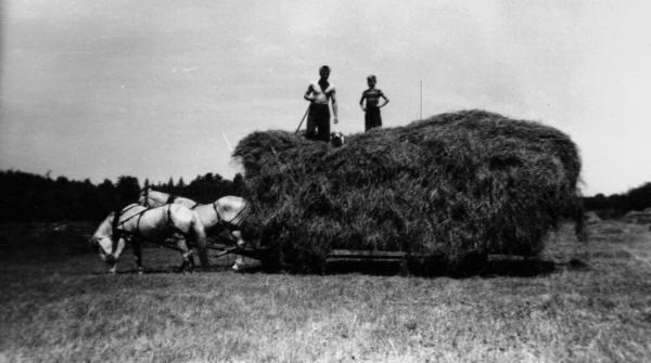 Travail à la ferme: voyage de foin tiré par deux chevaux