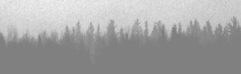 Forêt en gris