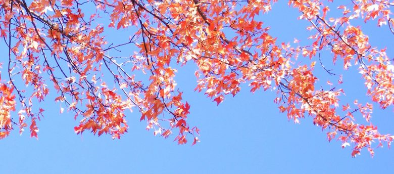 Branches Feuilles Rouges 6010