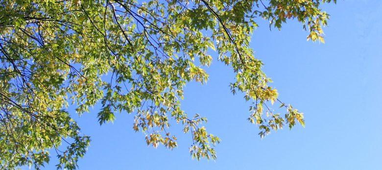 Branches Feuilles Vertes 5980