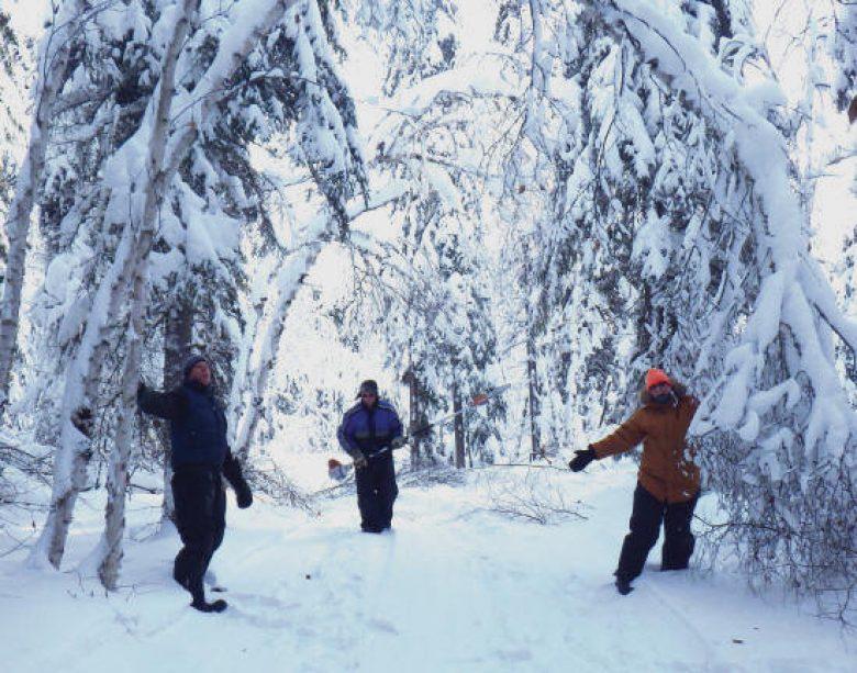 Arbres pliés sous le poids de la neige
