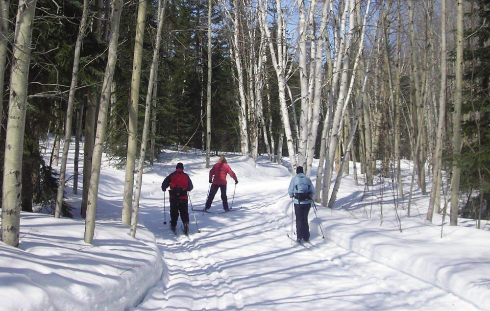 Trois skieurs dans un sentier près de bouleaux